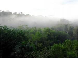 Amazonas skoven