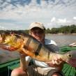Amazonas – fisk fantastiske rovfisk