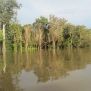 Amazonas regnskov 2017