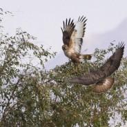 Fugletur til Eilat 2017