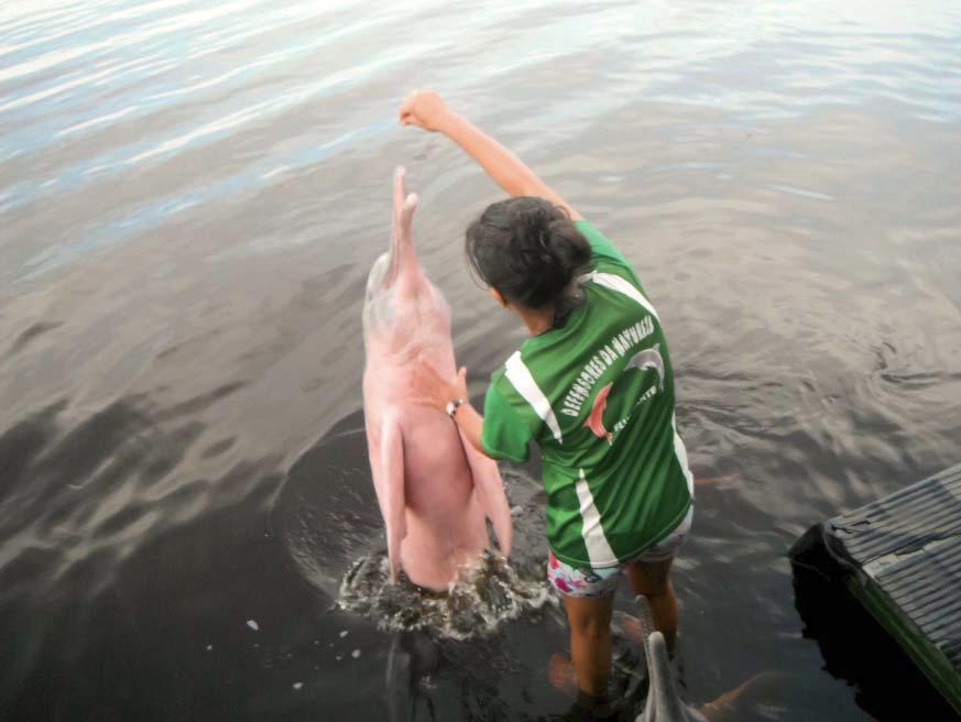 Fodring af flodens lyserøde delfiner