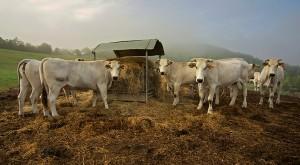 Farm Il Forteto