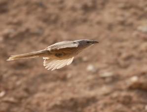 fugl3 Eilat Israel